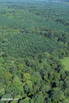 Aerial view of rainforest and oil palm plantations in Costa Rica [costa_rica_aerial_0159]