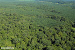 Aerial view of rainforest and oil palm plantations in Costa Rica [costa_rica_aerial_0163]