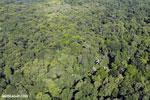 Overhead view of rainforest in Costa Rica [costa_rica_aerial_0165]