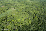 Aerial view of rainforest and oil palm plantations [costa_rica_aerial_0172]