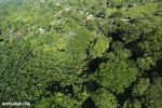 Aerial view of rainforest and oil palm plantations in Costa Rica [costa_rica_aerial_0175]