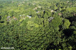 Aerial view of rainforest and oil palm plantations in Costa Rica [costa_rica_aerial_0177]