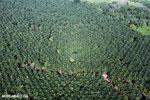 Palm oil in Costa Rica [costa_rica_aerial_0193]