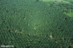 Oil palm plantation in Costa Rica [costa_rica_aerial_0194]