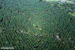 Palm oil in Costa Rica [costa_rica_aerial_0195]