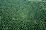 Oil palm plantation in Costa Rica [costa_rica_aerial_0196]