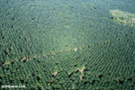 Oil palm plantation in Costa Rica [costa_rica_aerial_0198]