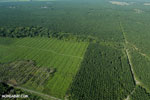 Oil palm plantation in Costa Rica [costa_rica_aerial_0204]