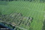 Palm oil in Costa Rica [costa_rica_aerial_0207]