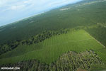 Palm oil in Costa Rica [costa_rica_aerial_0211]