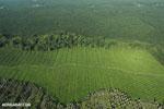 Oil palm plantation in Costa Rica [costa_rica_aerial_0212]