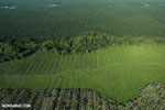 Oil palm plantation in Costa Rica [costa_rica_aerial_0214]