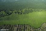 Palm oil in Costa Rica [costa_rica_aerial_0215]