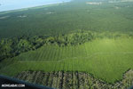 Palm oil in Costa Rica [costa_rica_aerial_0217]
