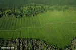 Oil palm plantation in Costa Rica [costa_rica_aerial_0218]