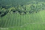 Palm oil in Costa Rica [costa_rica_aerial_0219]