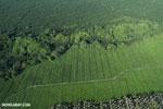 Oil palm plantation in Costa Rica [costa_rica_aerial_0222]