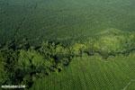 Palm oil in Costa Rica [costa_rica_aerial_0225]