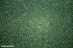 Oil palm plantation in Costa Rica [costa_rica_aerial_0228]