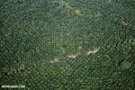 Oil palm plantation in Costa Rica [costa_rica_aerial_0232]