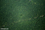 Oil palm plantation in Costa Rica [costa_rica_aerial_0234]