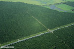 Palm oil in Costa Rica [costa_rica_aerial_0241]