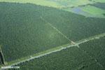 Oil palm plantation in Costa Rica [costa_rica_aerial_0242]