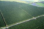 Palm oil in Costa Rica [costa_rica_aerial_0243]