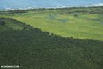 Palm oil in Costa Rica [costa_rica_aerial_0247]