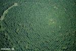 Oil palm plantation in Costa Rica [costa_rica_aerial_0248]