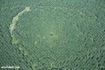 Palm oil in Costa Rica [costa_rica_aerial_0251]