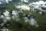 Airplane view of rain forest in Costa Rica [costa_rica_aerial_0283]