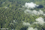 Overhead view of rainforest in Costa Rica [costa_rica_aerial_0310]