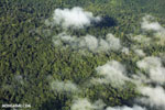 Overhead view of rain forest in Costa Rica [costa_rica_aerial_0311]