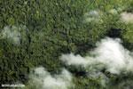 Aerial view of rainforest in Costa Rica [costa_rica_aerial_0320]