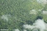 Overhead view of rain forest in Costa Rica [costa_rica_aerial_0323]