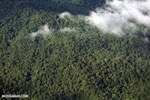 Aerial view of rainforest in Costa Rica [costa_rica_aerial_0326]