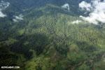 Palm oil and rainforests in Costa Rica [costa_rica_aerial_0331]