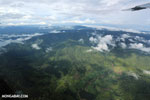 Oil palm plantation and rainforest in Costa Rica [costa_rica_aerial_0332]
