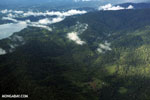 Palm oil and rainforests in Costa Rica