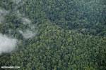 Aerial view of rain forest in Costa Rica [costa_rica_aerial_0349]