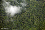 Aerial view of rain forest in Costa Rica [costa_rica_aerial_0361]