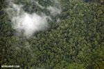 Aerial view of rain forest in Costa Rica [costa_rica_aerial_0361]