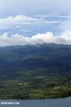 Oil palm plantation in Costa Rica [costa_rica_aerial_0380]