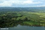 Oil palm plantation in Costa Rica [costa_rica_aerial_0382]