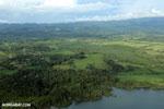 Oil palm plantation in Costa Rica [costa_rica_aerial_0384]