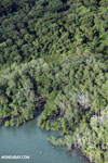 Coastal forest in Costa Rica
