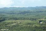 Oil palm plantation in Costa Rica [costa_rica_aerial_0391]