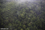 Airplane view of rain forest in Costa Rica [costa_rica_aerial_0401]