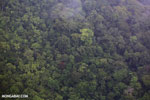 Aerial view of rain forest in Costa Rica [costa_rica_aerial_0403]
